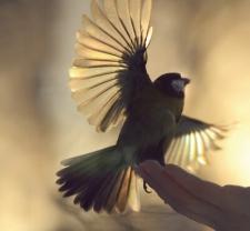 elation-bird-set-free CROPPED